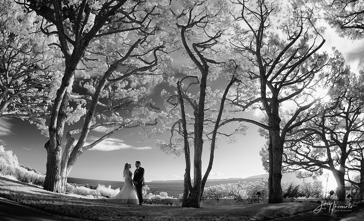 Wayfarers-Chapel-and-Redondo-Beach-Library-Wedding_0024_1646
