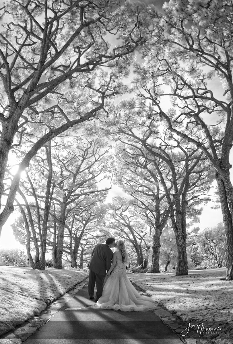 Wayfarers-Chapel-and-Redondo-Beach-Library-Wedding_0027_1710