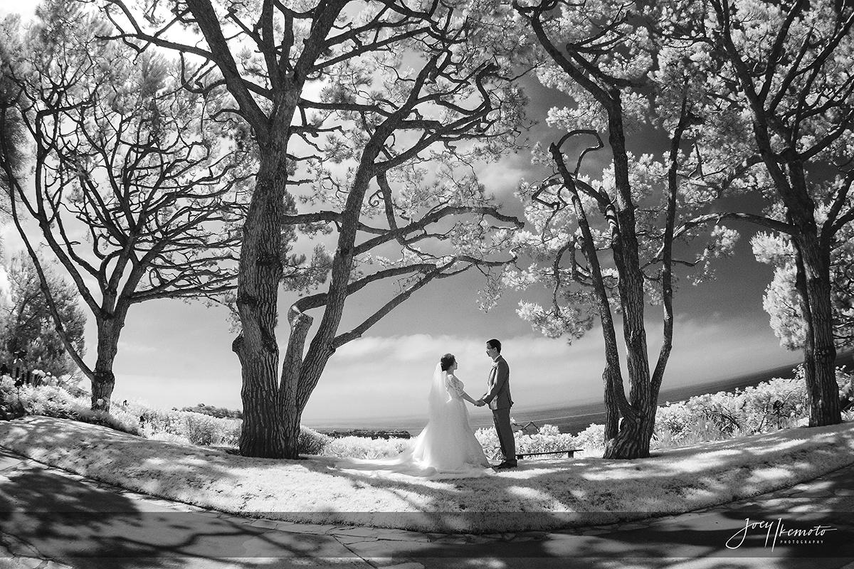 Wayfarers-Chapel-and-Portofino-Redondo-Beach-Wedding_0025_1526