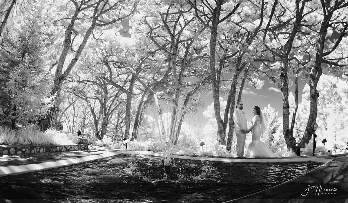 wayfarers-chapel-palos-verdes-and-the-green-onion-san-pedro-wedding_0100_1965